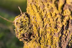 Tree (Lucien Schilling) Tags: cadzandbad