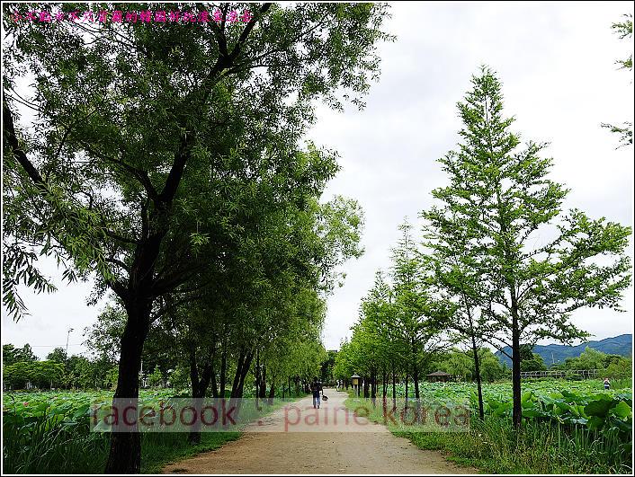京畿道 兩水頭 洗美苑 (114).JPG