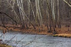 Middle Fork of Little Beaver Creek, Ohio (Wild & Scenic Rivers) Tags: hemlock beech littlebeavercreek littlebeavercreekstatepark