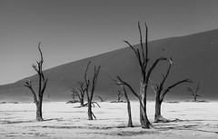 Dead Vlei - Namib desert (www.MiPHO.de - Michael Schwarz Photography) Tags: bw tree landscape dead michael sand desert award sw landschaft namibia weiss schwarz sossusvlei namib vlei weis mipho bwsw mondedelaphoto photographyforrecreation bwphotographyforrecreation wwwgsmotorradreisende