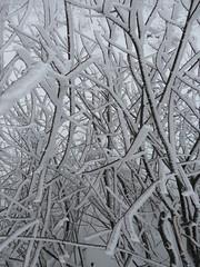 IMG_8564 (Bike and hiker) Tags: winter mist hiver sneeuw neige venn hoge hautes fagnes venen hohes botrange neur bayehon low