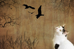 Lying in Wait..... (DaisyDeeM) Tags: trees abstract texture birds composite cat c greeneyes zeb catdream cattrance