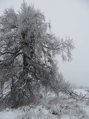 IMG_8609 (Bike and hiker) Tags: winter mist hiver sneeuw neige venn hoge hautes fagnes venen hohes botrange neur bayehon low