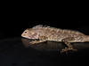 Lizzie (Jackie & Dennis) Tags: india lizzie lizard wayanad rwh kalpetta bansura ramblersworldwideholidays kuttiyamvayall spicesplantationshillstations banasuraislandretreat