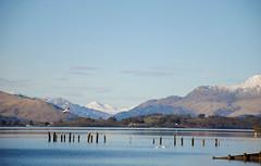 Sunny Loch Lomond (gabriele.ruc) Tags: blue sky seagulls mountain lake nature scotland outdoor snowy range balloch lochlomond seagul