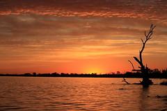 Lake Bonney (Malleeroute) Tags: sunset river murray barmera lakebonney