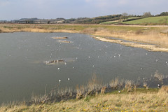 North Cave Wetlands (nataliemarchant) Tags: birds yorkshire yorkshirewildlifetrust northcavewetlands