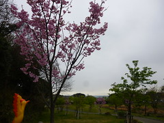 Moltres in Yokosuka, Kanagawa 36 (Kannonzaki park) (Kasadera) Tags: toys figure pokemon pokémon yokosuka 横須賀 神奇寶貝 ポケモン lavados 観音崎公園 moltres 火鳥 ファイヤー pokemonkids 寵物小精靈 파이어 kannonzakipark sulfura ポケモンキッズ 火焰鳥