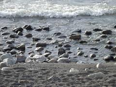 Lago y rocas 5 (imageneslibres) Tags: naturaleza lago piedras espuma