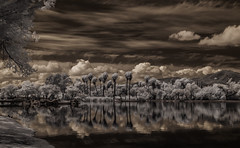 View From The Shore At Santee Lakes (Bill Gracey) Tags: trees sky water clouds reflections ir highcontrast surreal palmtrees infrared otherworldly santeelakes infraredphotography convertedinfraredcamera