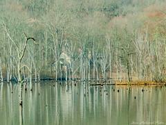 Along The Monksville Shoreline_14214 (smack53) Tags: new lake water canon reflections landscape spring scenery powershot reservoir jersey springtime ringwood g12 monksville westmilford monksvillereservoir smack53