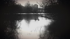 A breeze of hush (mabumarion) Tags: bw white lake black reflection nature water backlight phonecam geese noir outdoor silhouettes lakeside breeze hush calmness iphone ferkensbruch lthemhle