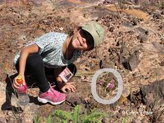 Flor do Cerrado ( Graa Vargas ) Tags: flower cerrado graavargas flordocerrado cerradosflower 2015graavargasallrightsreserved