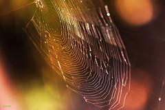 Atrapado en la red? (Gloria Ayala Barrera) Tags: red naturaleza nature grancanaria spider colours web canarias colores araa canaryislands islas telaraa laspalmasdegrancanaria canon70d