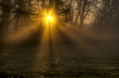 Light beams through the Fog (Klaus Ficker --Landscape and Nature Photographer--) Tags: morning trees light usa sun fog sunrise canon morninglight early spring kentucky beam rays frankfort canonef24105mmf4lisusm eos5dmarkii kentuckyphotography klausficker