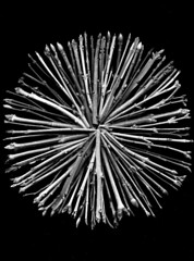 57250.03 twigs (horticultural art) Tags: blackandwhite bw circle mandala tips stems twigs branchtips horticulturalart