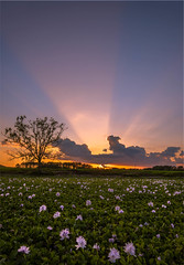 lilil-2 (will.mcgalliard) Tags: county sunset sun tree green water sunrise landscape nikon ray florida cove farm pad clay springs lilly swamp d750 jacksonville 1635mm