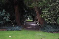 Path of leaning trees - Arboretum Kalmthout (stephenmid) Tags: belgium kalmthout