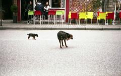 -008 (Indiana C.) Tags: dogs athens kastraki