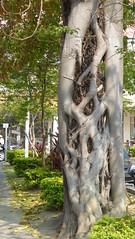 P1050303 (Big Tree Chen) Tags: