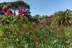 villa hanbury (catherina unger) Tags: flowers sea italy liguria villa botanicalgarden seaview springtime ventimiglia ortobotanico villahanbury