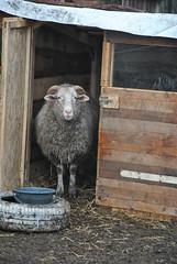 DSC_0075 (Rinswid) Tags: park nature animal spring kharkov feldman ecopark