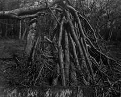Piled Branches (Hyons Wood) (Jonathan Carr) Tags: trees bw white abstract black monochrome rural landscape forestry branches logs 4x5 abstraction northeast largeformat 5x4 ancientwoodland hyonswood