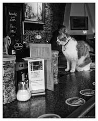 Bar Pussy Cat - Caf de Doelen, Amsterdam (GAPHIKER) Tags: netherlands amsterdam bar cat cafe tavern pussycat doelen cafdedoelen