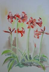 Amarilis - Bulbos (paco tejedor) Tags: flores rojo plantas verdes bulbos amarilis