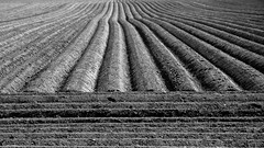agricultural geometry (Eric Spies) Tags: bw monochrome field lines contrast germany mono blackwhite nikon angle zwartwit earth linie farming landwirtschaft land contraste campo winkel sw monochrom agriculture schwarzweiss parallel kontrast allemagne contrasts nordrheinwestfalen linea germania champ lignes acre duitsland ligne acker dx lijnen erde 18105 hoek niederrhein agro agricultura grond linee agricoltura cultivated contrasto aarde kleve linien kontraste landbouw paralelo contrasten parallelo parallle akkerbouw loodrecht haaks d7100 champcultiv reichswalde triftstrase engelsstrase drengelsstrase