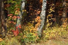 DSC_6011 (Rustam Bikbov) Tags: autumn september 2012    sverdlovskoblast