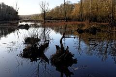 livry sur Seine, HDR, 6 (Patrick.Raymond (2M views)) Tags: france seine landscape nikon eau ens et 77 foret arbre hdr bois tang marne expressyourself