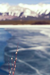 A promise (Tracey Rennie) Tags: lake snow ice kananaskis spring bokeh alberta promise thaw pussywillow
