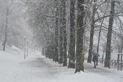Ritratto di un freddo Marzo - Portrait of a cold March. (sinetempore) Tags: street trees woman white snow girl alberi torino donna neve turin bianco ragazza fiocchidineve parcodelvalentino snowflaes ritrattodiunfreddomarzo portraitofacoldmarch