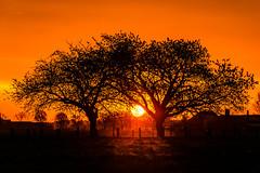 Sonnenaufgang am Niederrhein (jwfoto1973) Tags: trees sunset sun tree nature silhouette germany landscape deutschland nikon natur landschaft sonne bume sonnenaufgang baum niederrhein kevelaer silhouetten d7100 johannesweyers