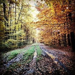 Many routes. (c)2015_t.t.a.b. - #familytime #forest... (Tomski TTABOGRAPHY) Tags: autumn colors forest season one path many routes ano beatiful familytime tomski ttab treemagic uploaded:by=flickstagram anopanka klobuckcounty tomskijr ttabography anoprojekt panatommedia instagram:photo=11051713890144774991484642177