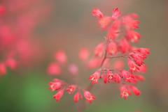 Emerge (Fe 108Aums) Tags: flowers red creativity silence void emptiness emerge waynedyer creationstory genesisday1