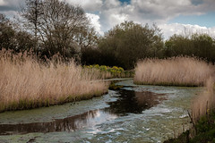 Reed Beds Ahead (Ian Hayhurst) Tags: