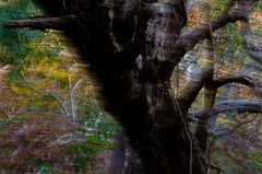 tank hill ix (Kenneth Rowe) Tags: longexposure tankhill icm multipleexposures intentionalcameramovement