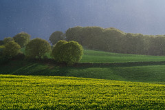 April 2016 (gepixelt) Tags: green rain yellow canon landscape powershot explore gelb april grn raps regen darksky rapeseed flickrexplore explored aprilwetter g7x powershotg7x canonpowershotg7x