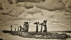 """coastal postal (listening to """"some of adam's blues"""", the quaker city night hawks) (jeneksmith) Tags: trees sky plants beach nature water clouds canon fence mississippi coast sand natural coastal shore passchristian mississippisound hendersonpoint canoneos70d"""