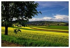 20160424-164220 (lichtschattenjaeger) Tags: yellow landscape gold diesel bio eifel gelb raps biodiesel vulkan getreide gerste weizen benzin hafer biosprit