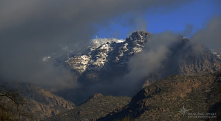 IMG_2259 Snow in the Sonoran Desert©Dancing Snake Nature Photography
