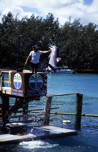 """Bahamas 1988 (288) Paradise Island: Paradise Lake • <a style=""""font-size:0.8em;"""" href=""""http://www.flickr.com/photos/69570948@N04/23857247520/"""" target=""""_blank"""">View on Flickr</a>"""