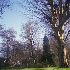 Parc - Yashica Mat 124G (annelaurem) Tags: blue trees winter sky france exterior yashicamat124g auxerre