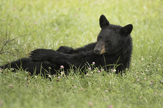 Mama Bear relaxing