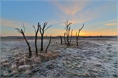 Deadvlei, Kalmthoutse Heide (jos.pannekoek) Tags: landscape nikon belgie nederland tokina heide landschap kalmthout d7000 tokina1116mmf28 tokinaaf1116mmf28