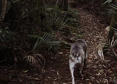 IMG_1443 (familynotblood) Tags: trees newzealand dog tree dogs nature forest bush nz bushwalk dogphotography