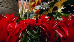 Bellagio_Chinese New Year 1-7 (Swallia23) Tags: las vegas flowers money hotel peach chinesenewyear casio nv bellagio yearofthemonkey 2016 conservatorybotanicalgarden
