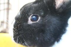 IMG_3434 (Gioser_Chivas) Tags: rabbit bunny animal conejo mascota mamifero vertebrado gioserchivas